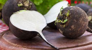 Radis noir une racine qui soigne at loovence - Cuisiner le radis noir cru ...