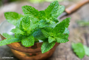 Fresh mint on a wooden table. The rustic style. Selective focus