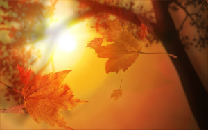 1060854__autumn-leaves-wallpaper-wallpapers_p