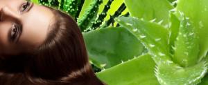 aloe-vera-cheveux-secs-pointes-3