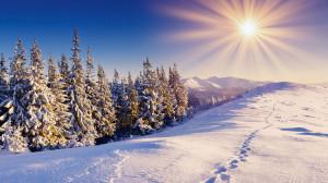 fonds-ecran-foret-hiver-10