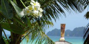 fleurs-de-monoi
