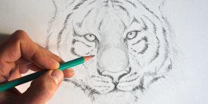 dessiner-un-tigre-dessin-creation