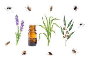 huile-essentielle-anti-insectes