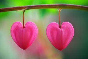 Pétalos-en-forma-de-corazón